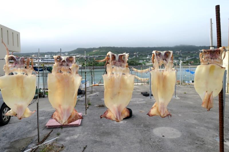 奥武島で干されていたイカ