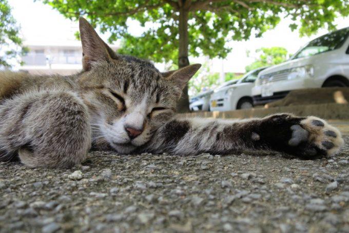 那覇の識名園で眠る猫。