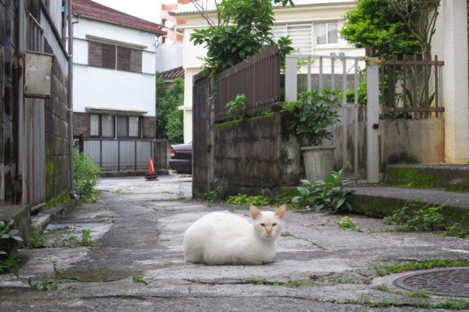 道路に鎮座する大福ネコ