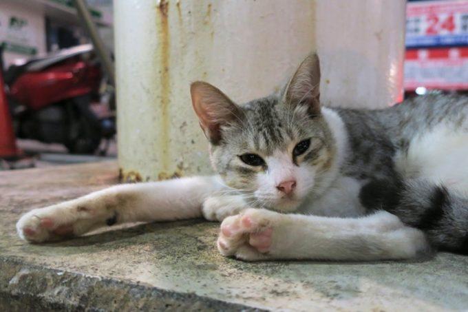 那覇・栄町にいた人慣れしている猫