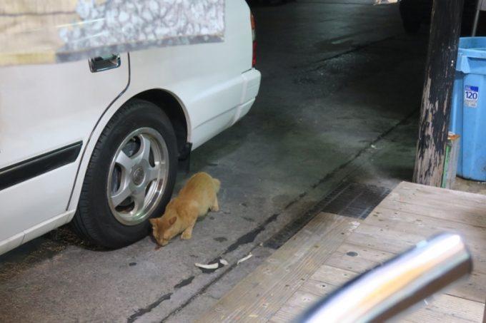 いつの間にか外カウンターの周辺に、餌をもらに野良猫が。