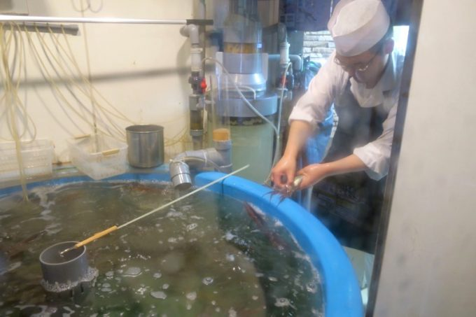 函館・五稜郭本町「いか清 本店」にはイカの生簀がある