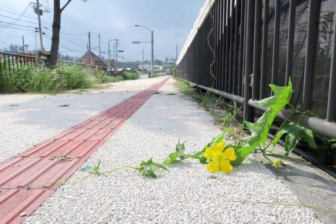 恩納村の歩道にはみ出る花と蔦