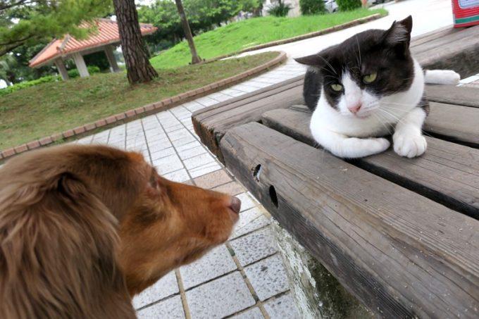 うみそら公園にいた猫サマーと熊本犬