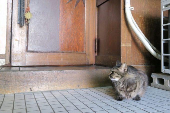 「六曜舎」の入り口に猫がいた