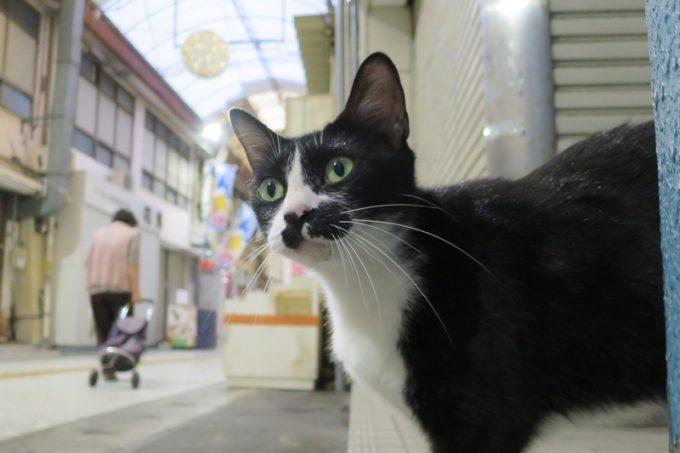 那覇・むつみ橋商店街かどこかにいた猫
