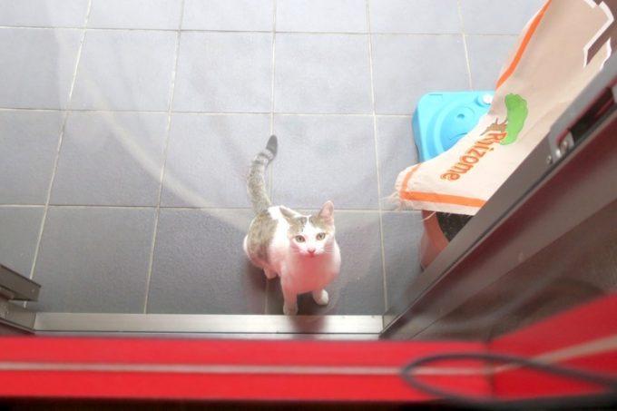 お店の外で猫のニャアニャア呼ぶ声がした
