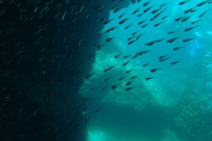 青の洞窟の海中(その3)