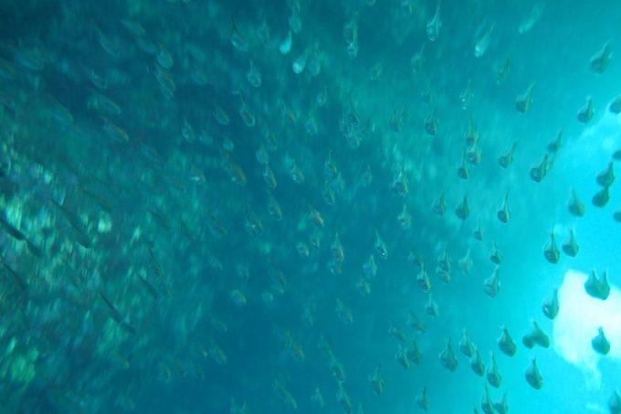 青の洞窟の海中(その4)