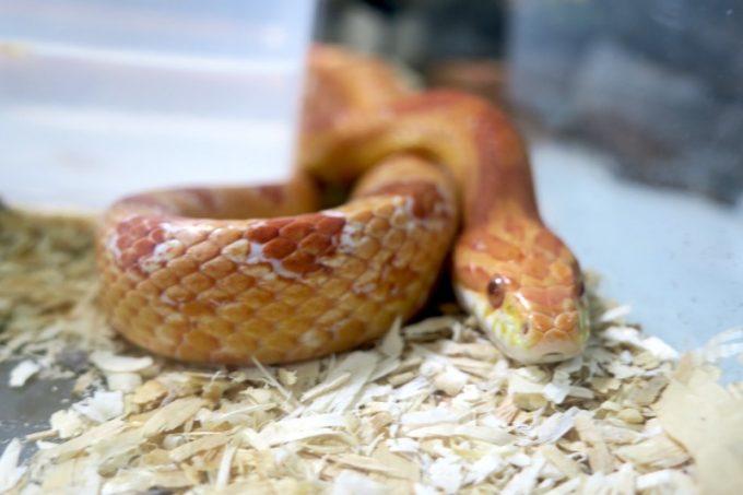 エントランスにいたヘビ。
