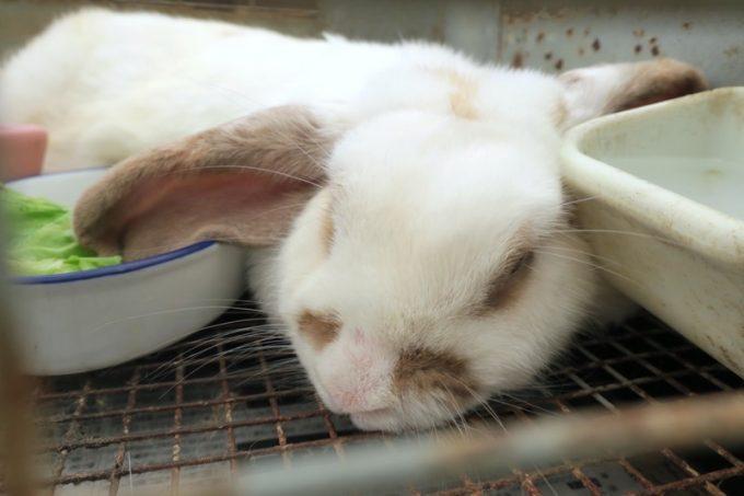 ウサギさんも暑くて寝ている。