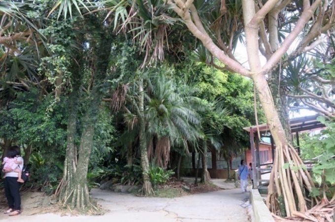 屋外コーナーには南国らしい木々が。