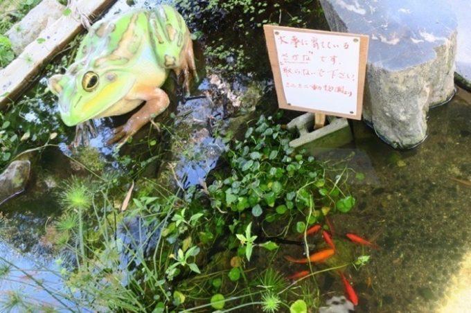 魚を摂らないよう注意書き。