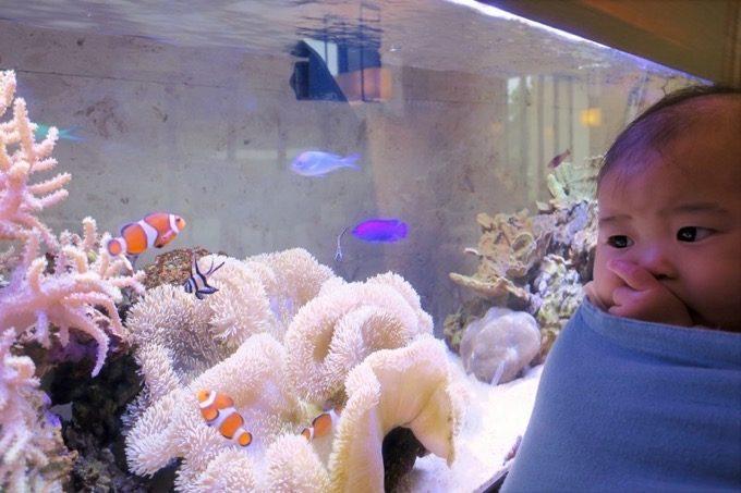 ロビーには小さな水槽あり、沖縄らしい熱帯魚が泳いでいた。