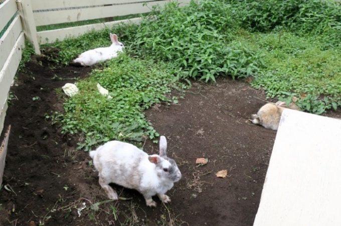 ふれあい動物広場にはウサギがいた。