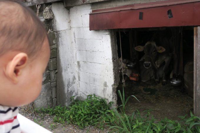 でも脇にある窓から牛さんたちを眺めることができる。