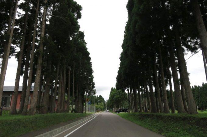 北斗市にある「トラピスト修道院」の杉並木。