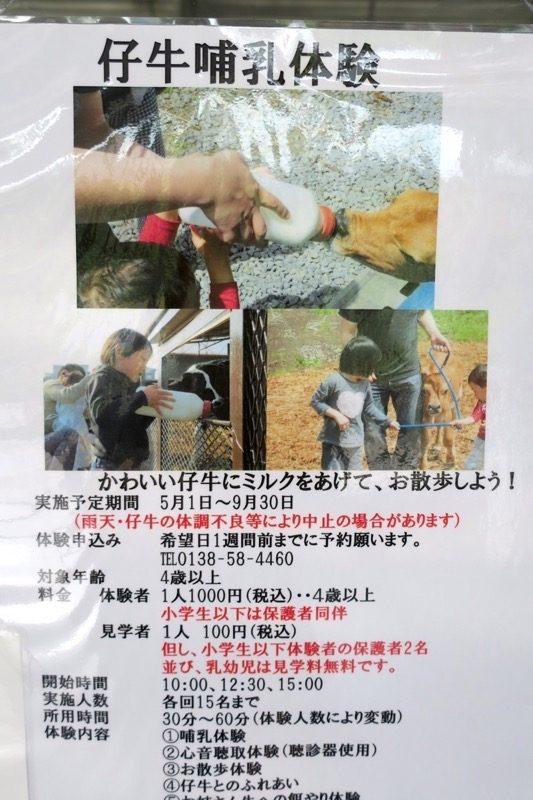 函館牛乳では仔牛の哺乳体験も行なっている