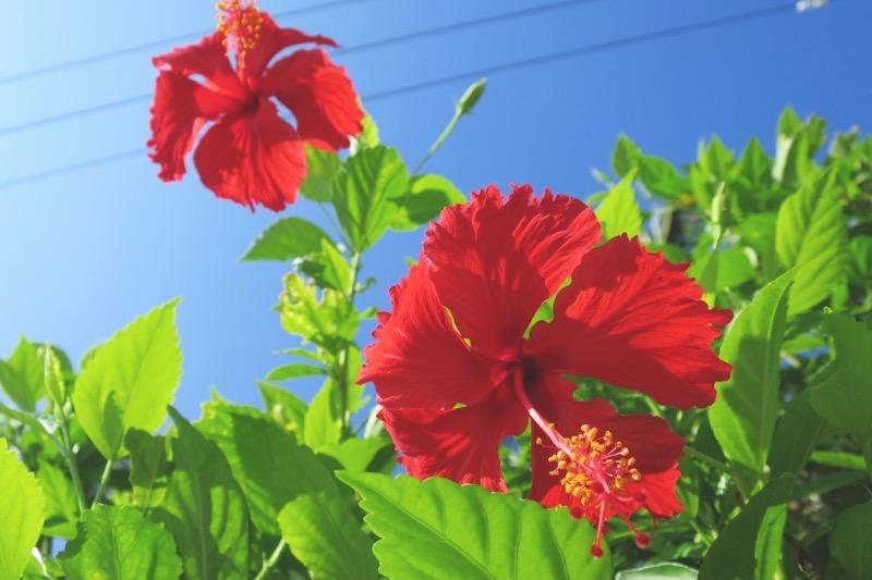 沖縄はいまだ夏。