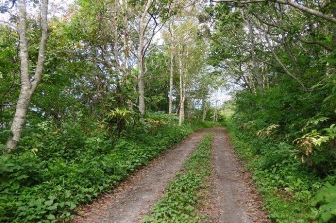 登山道が整っているのは、整備した軍道を利用しているからだ。