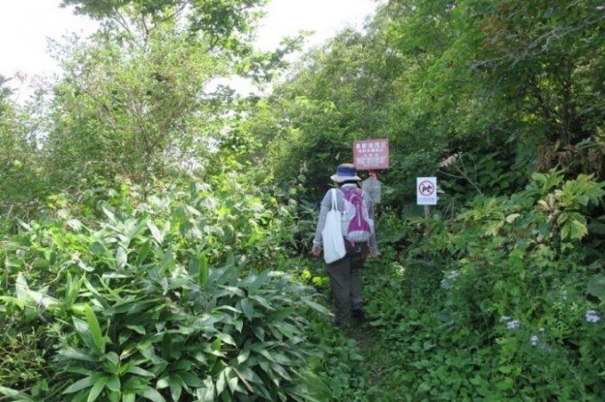 函館山の薬師山コースを歩く。