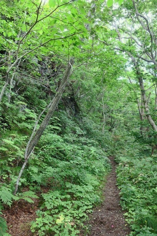 薬師山ルートはかろうじてある山道を進んで行く。