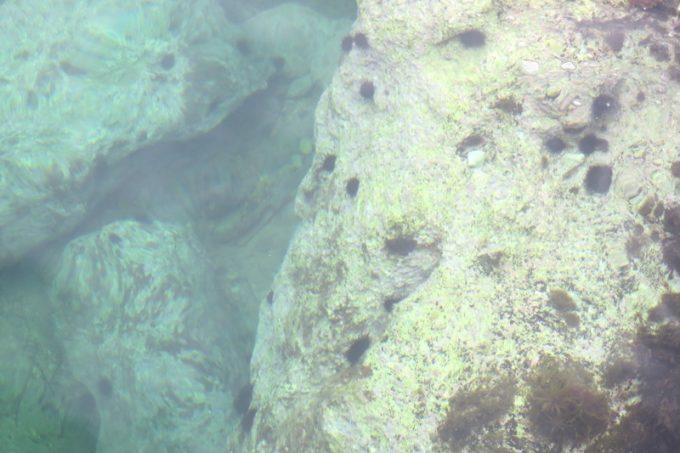 透明度が非常に高く、岩にへばりついたウニがよく見えた。