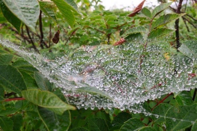 雨に濡れた蜘蛛の巣にも哀愁を感じてしまう。