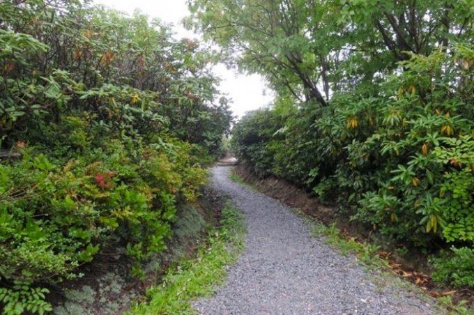 五智山展望台への山道。