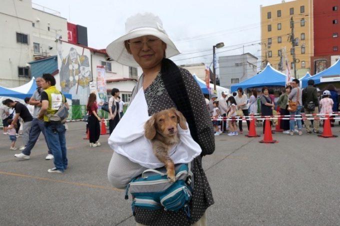 お犬サマーと一緒だったので、秋田犬は断念することに。