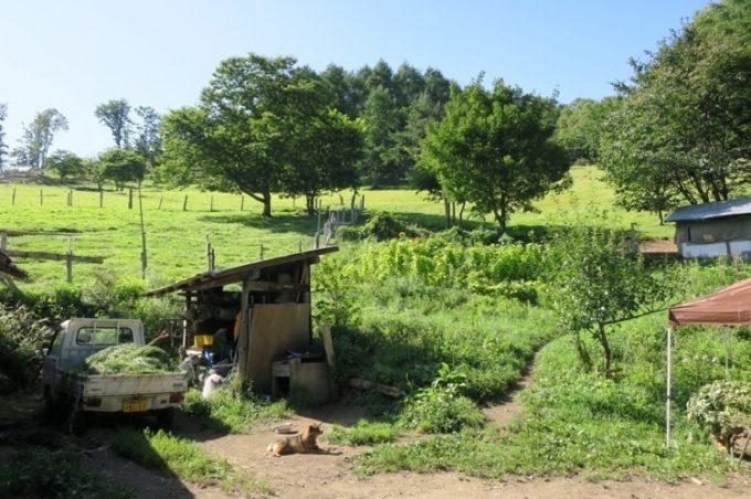 山田農場のヤギ小屋と、おとなしい番犬。