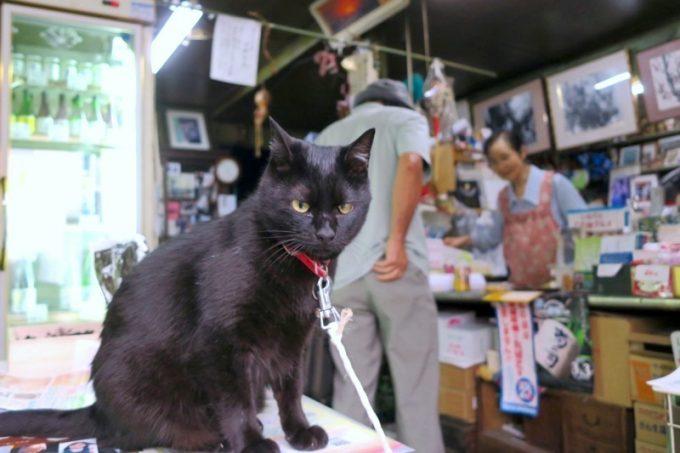 「平興商店」に入ると、看板猫のミミちゃんがお出迎え。