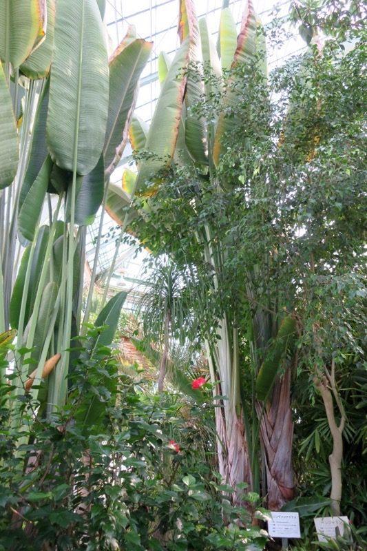 「函館市熱帯植物園」の中は、まるでジャングル!(その1)