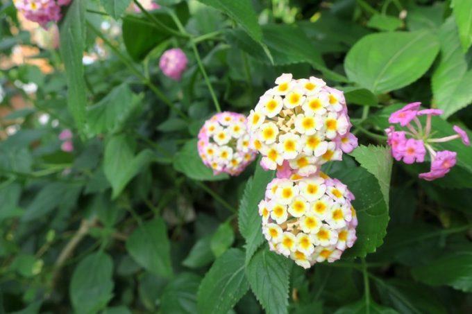 「函館市熱帯植物園」に咲く花(その1)。