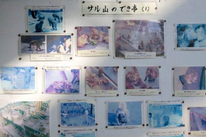 「函館市熱帯植物園」にあったサル山のでき事という掲示物。
