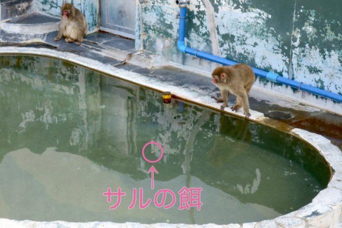 サル山に餌を投げ入れるも、プールに入ってしまう。