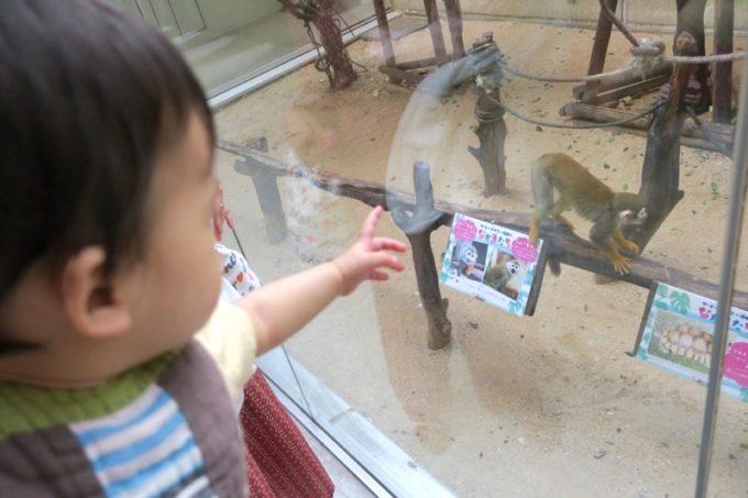 「ザ・ビーチタワー沖縄」のふれあい動物園が楽しい!