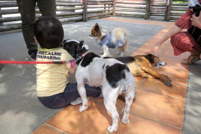 「ザ・ビーチタワー沖縄」には犬も飼われている。