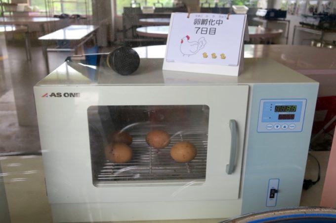 沖縄・今帰仁「あいあいファーム」のニワトリが産んだ卵。