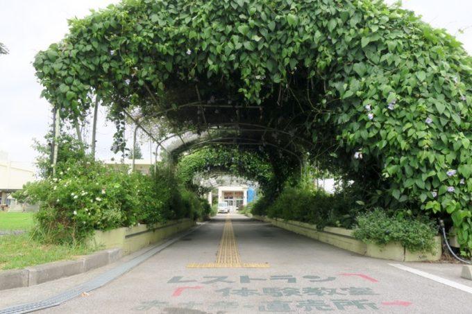 沖縄・今帰仁「あいあいファーム」草木が覆いかぶさる通路。