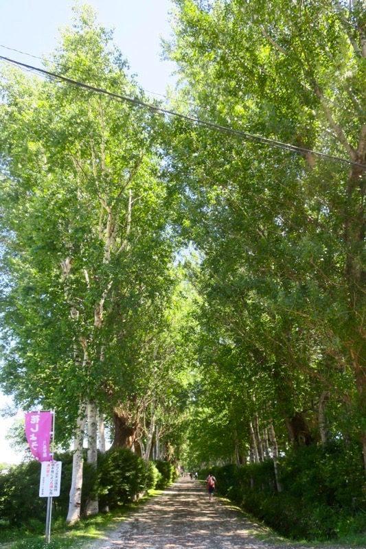 札幌「八紘学園 農産物直売所」敷地内には、北海道っぽいポプラ並木!