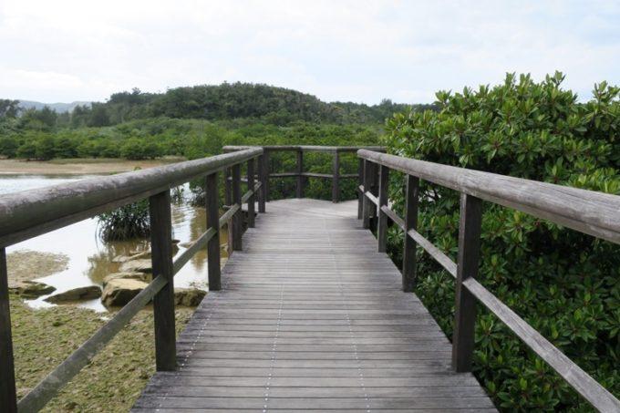 東村「慶佐次湾のヒルギ林」ヒルギ林内コースの遊歩道を歩いて進む。