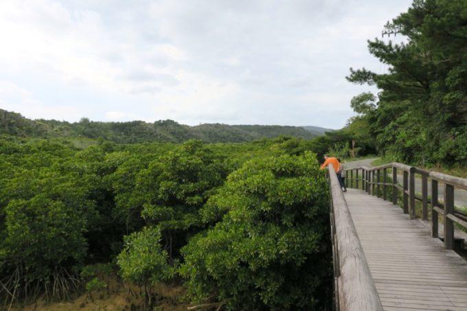 東村「慶佐次湾のヒルギ林」の干潟を眺めながらマングローブの林へ。