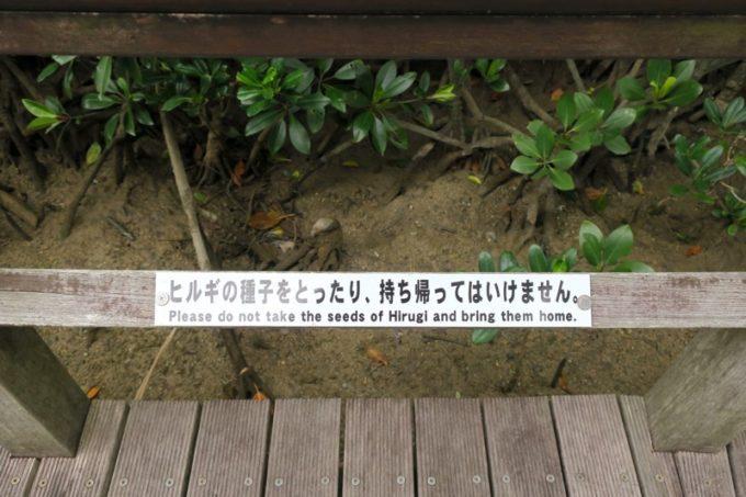 東村「慶佐次湾のヒルギ林」ヒルギの種子をとったり、持ち帰ってはいけない。