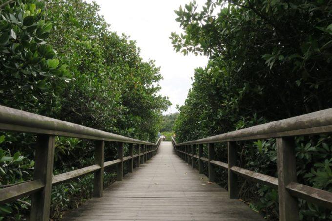 両サイドに広がる東村「慶佐次湾のヒルギ林」の先には、観察デッキがある。