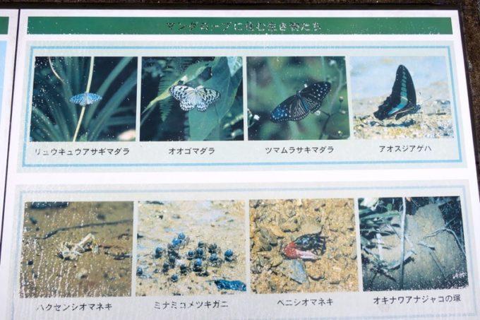 東村「慶佐次湾のヒルギ林」に生息する生き物たち(その1)