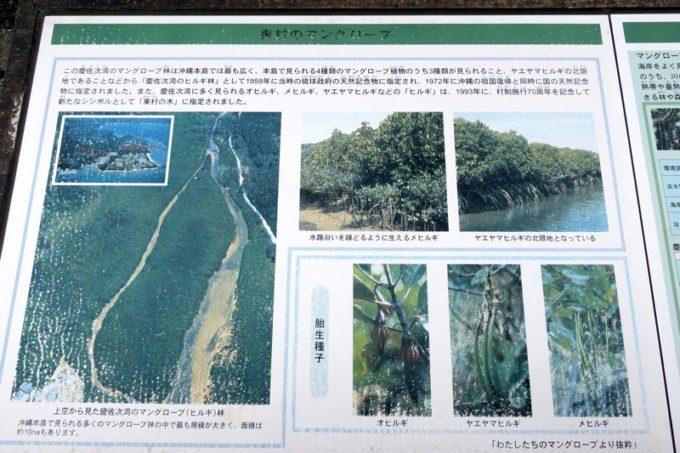 東村「慶佐次湾のヒルギ林」の予習をしてからマングローブ群生林に入って行く(その1)