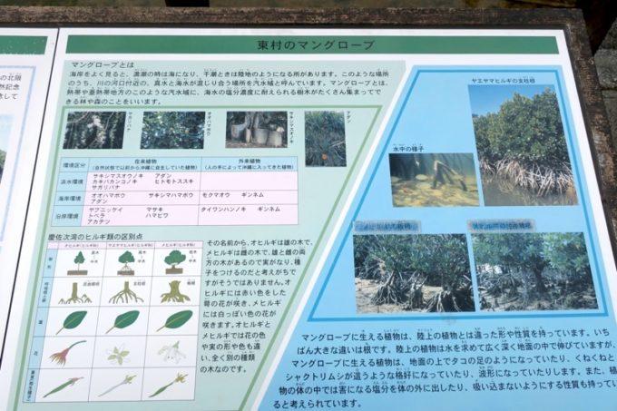東村「慶佐次湾のヒルギ林」の予習をしてからマングローブ群生林に入って行く(その2)