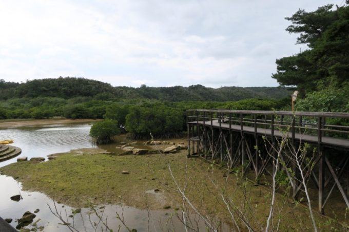 東村「慶佐次湾のヒルギ林」は遊歩道が整備されて歩きやすい。