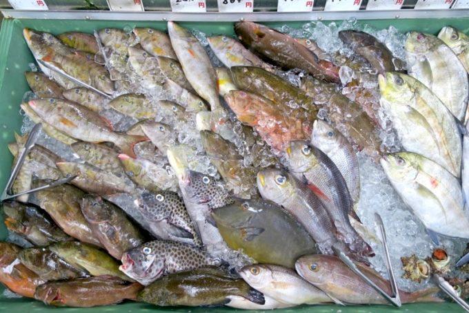 沖縄市「泡瀬漁港 パヤオ直売店」色味が抑えめの鮮魚。